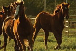 Texas Horse Country